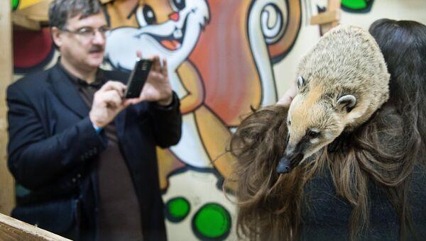 Носуха в контактном зоопарке. Архивное фото
