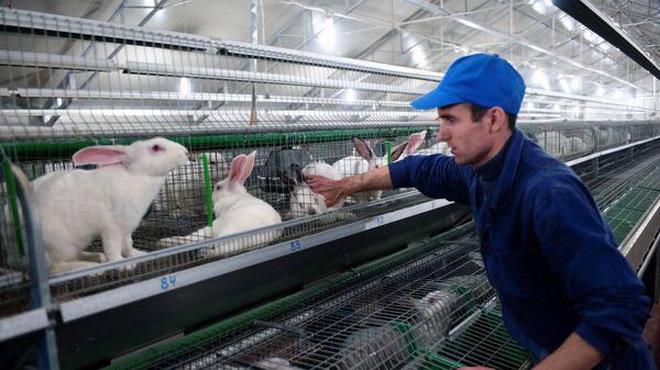 Кролиководческое хозяйство ООО Раббит