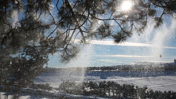 Снег на деревьях в лесу Симферопольского водохранилища