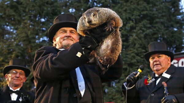 Член Клуба Джон Гриффитс держит сурка Фила, который предсказал еще шесть недель зимы, штат Пенсильвания, США