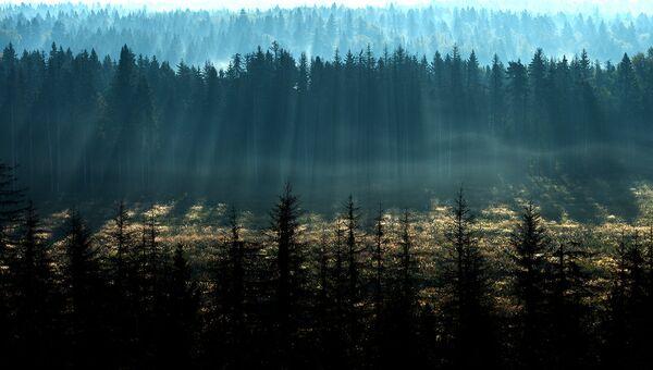 Реализацию нацпроекта Экология проконтролируют общество и эксперты