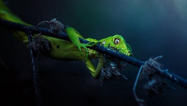 Работа фотографа из Панамы Jonatan Banista Cautious для 2017 Sony World Photography Awards