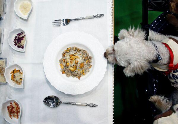 Собака на международной выставке Interpets в Токио
