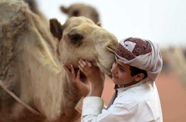 Фестиваль верблюдов имени Короля Абдулазизов