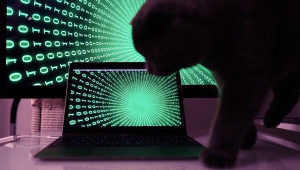 Информационные технологии. Архивное фото