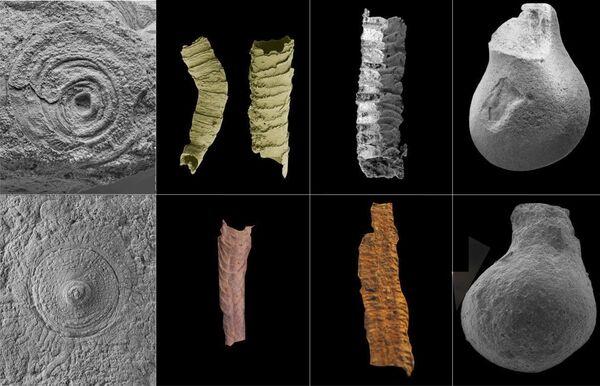 Фрагменты скелетных организмов (a-d) и их бесскелетных двойников (e-h)