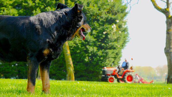 Собака и трактор