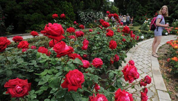 Розы . Архивное фото