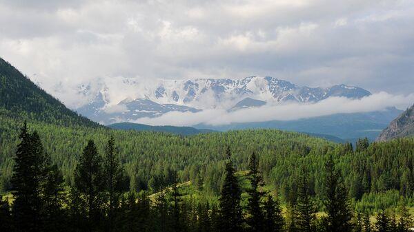 Сосновый бор в окрестностях Горно-Алтайска может стать зеленым щитом