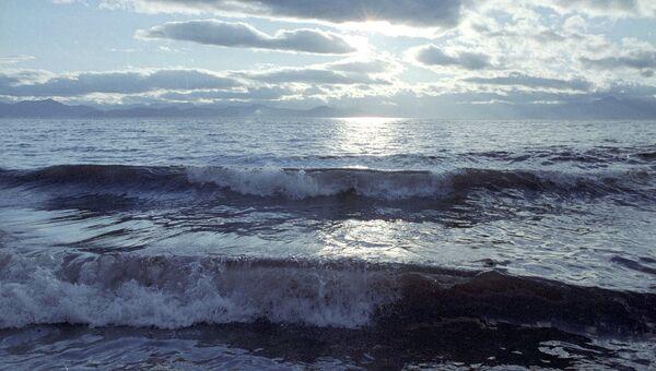Кормление серого кита сняли в прибрежных водах острова Беринга