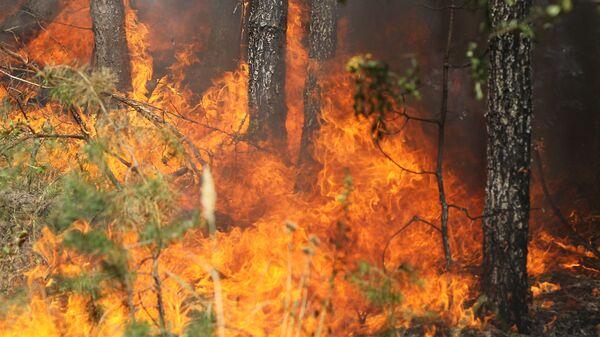 Пожар в лесу у поселка Сосновый бор в Воронежской области. 2 августа 2010