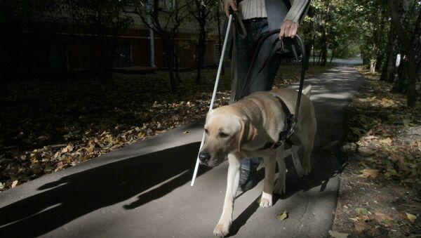 Собака-поводырь в городе. Архивное фото