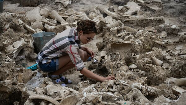 Фрагменты строения из костей мамонта времен палеолита, обнаруженные в ходе археологических раскопок на территории музея-заповедника Костенки в Воронежской области