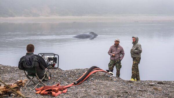 Операция по спасению застрявшего гренландского кита на острове Большой Шантар