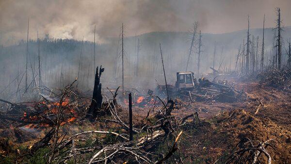 Последствия лесного пожара. Архивное фото