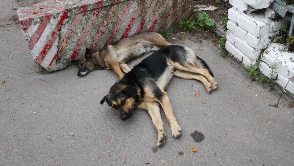 Бездомные собаки на улице. Архивное фото