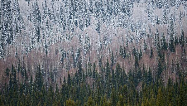 В Кемеровской области обустроят экотропу в рамках Года экологии