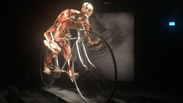 Открытие выставки Body Worlds в Женеве