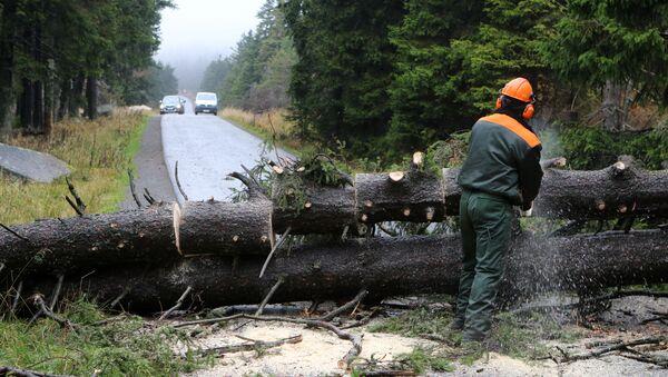 Рабочий распиливает дерево, поваленное ветром, чтобы расчистить дорогу неподалеку от горы Броккен в восточной Германии. 5 октября 2017