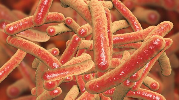 Бактерии Mycobacterium tuberculosis, возбудитель туберкулеза