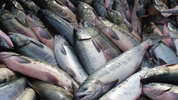 Датский миллиардер инвестирует 400 млн евро в рыбное хозяйство Эстонии