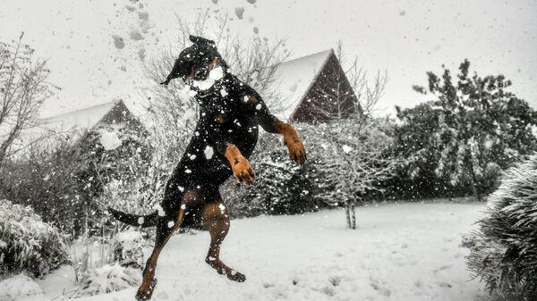 Снегопад во Франции