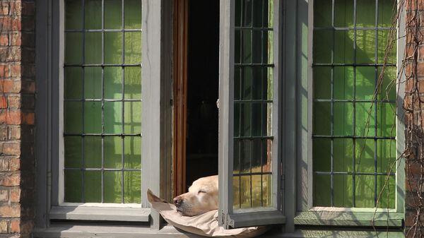 Собака греется на солнце в Бельгии. Архивное фото