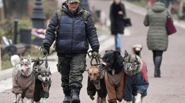Женщина выгуливает собак на улице. Архивное фото