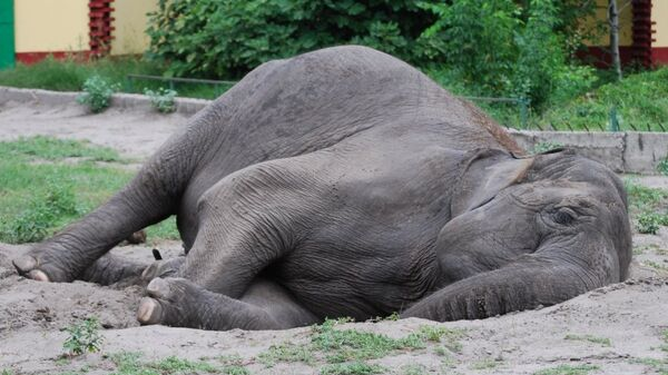Ученые выяснили, почему слоны спят на боку, а мыши – на животе
