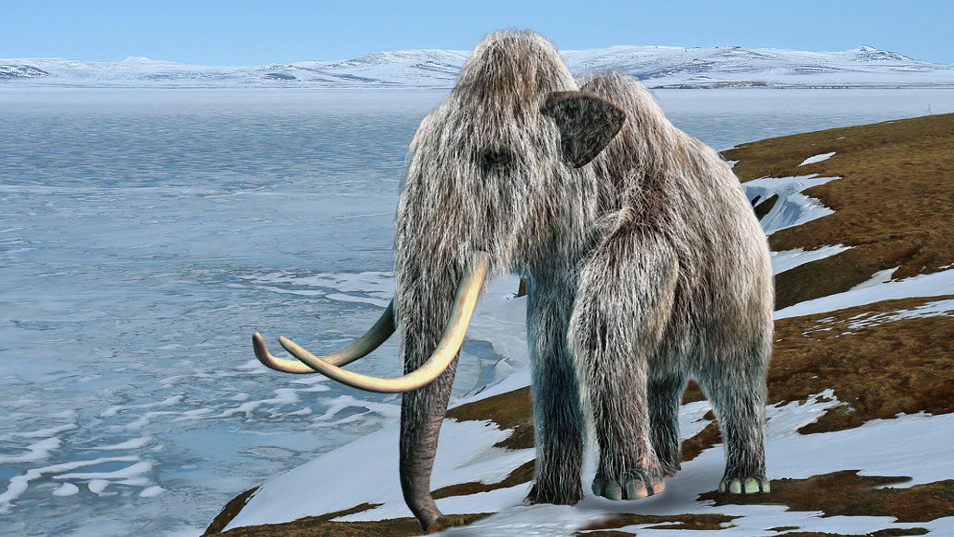 Самые последние шерстистые мамонты на Земле жили на острове Врангеля - РИА Новости, 1920, 16.02.2021