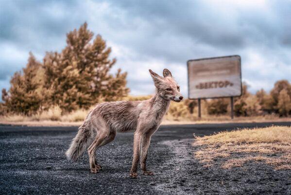 За 30 лет на запретной территории развелось множество диких животных.
