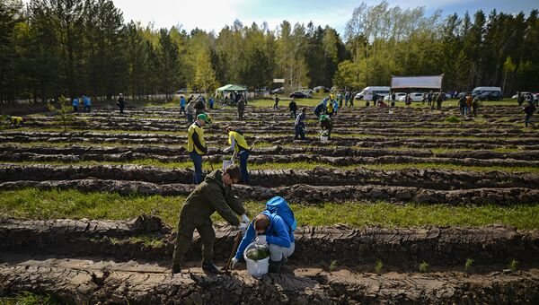 Волонтеры сажают саженцы хвойных пород деревьев. Архивное фото