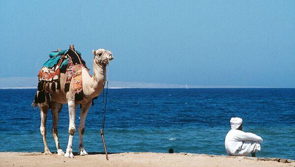 Верблюд и погонщик на берегу Красного моря в Египте. Архивное фото.