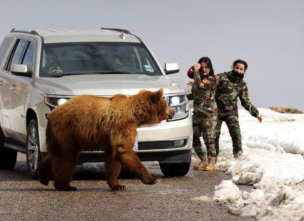 Иракские женщины и журналисты выпускают медведя в дикую природу, после того, как его спасли из частного приюта в городе Дахук
