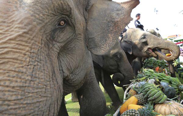 Слоны перед ежегодным турниром Кубок короля в Бангкоке, Таиланд