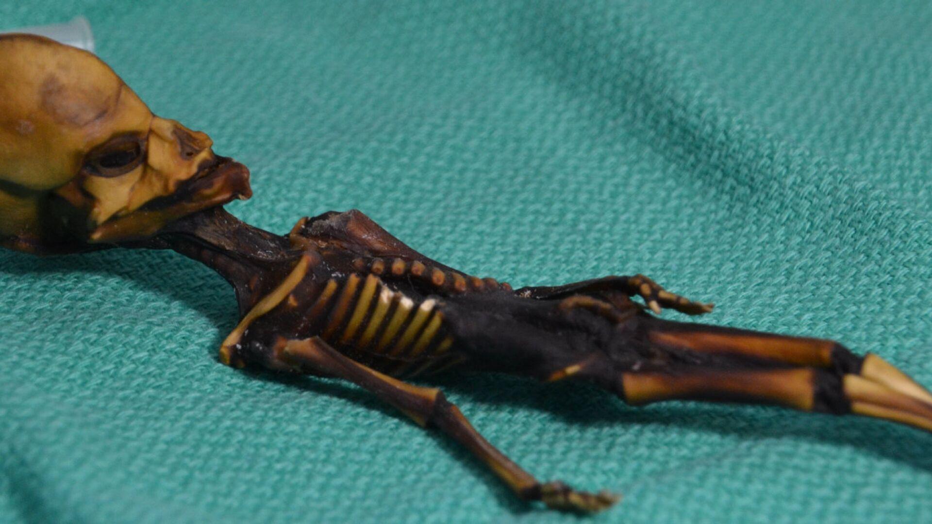 Атакамский гуманоид, найденный в 2003 году в пустыне в Чили - РИА Новости, 1920, 26.09.2020