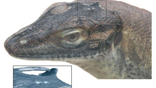 Реконструкция головы древнего варана, у которого было сразу  четыре глаза