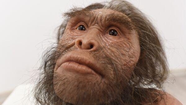 Реконструкция вида древних людей Homo naledi