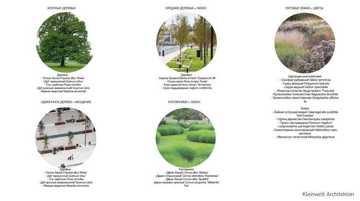 Проект озеленения парка