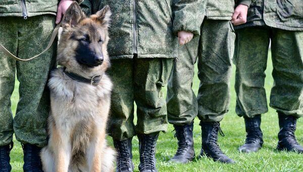 Служебная собака Пограничной службы ФСБ России по Республике Крым. Архивное фото