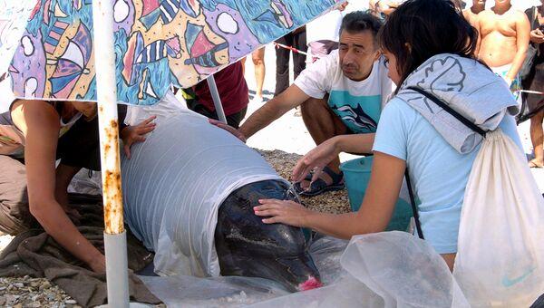 Люди оказывают помощь дельфину, которого выбросило на берег в Италии