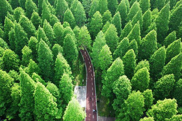 Национальный лесной парк в Донгтае, Китай