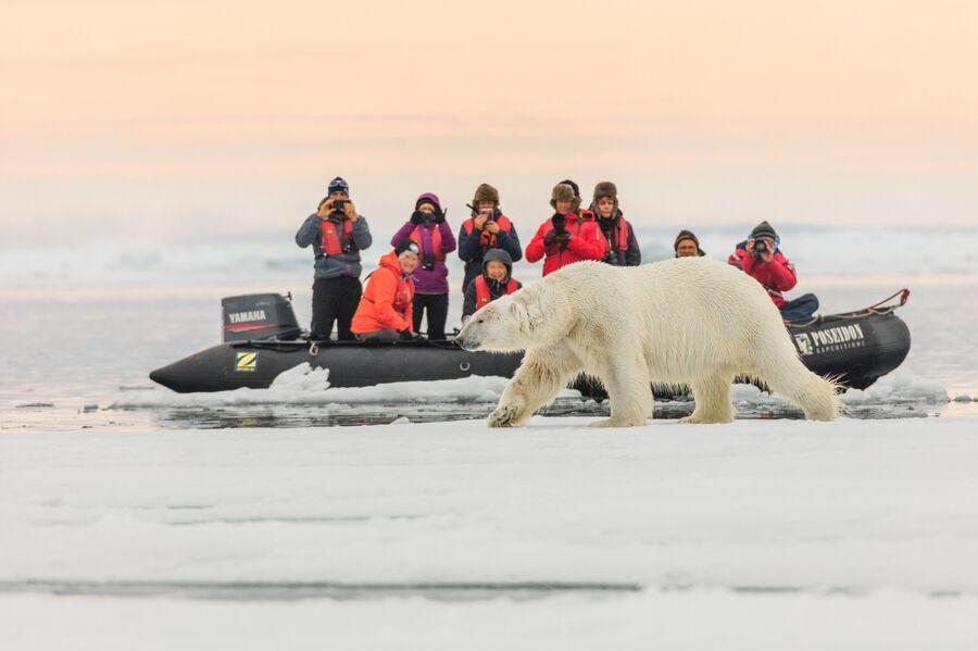 Туристы фотографируют белого медведя, Земля Франца-Иосифа, национальный парк Русская Арктика