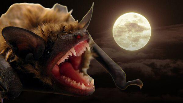 Вампировые летучие мыши — одни из самых известных гематофилов в дикой природе