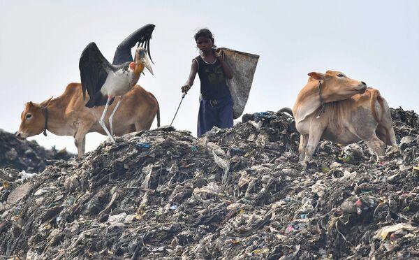 Индийская сборщица мусора в Гувахати