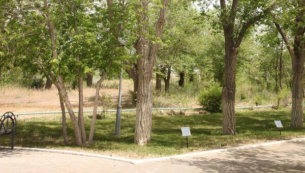 Дерево, посаженное Гагариным на Байконуре