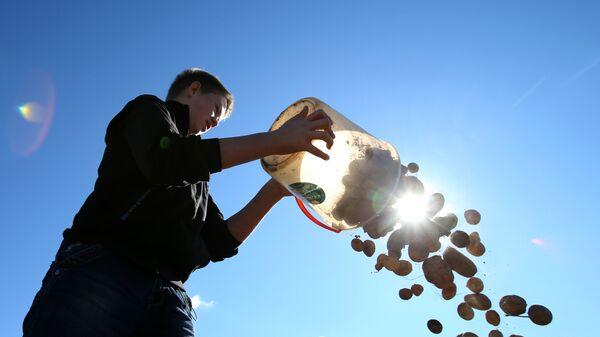 Молодой человек во время уборки урожая картофеля