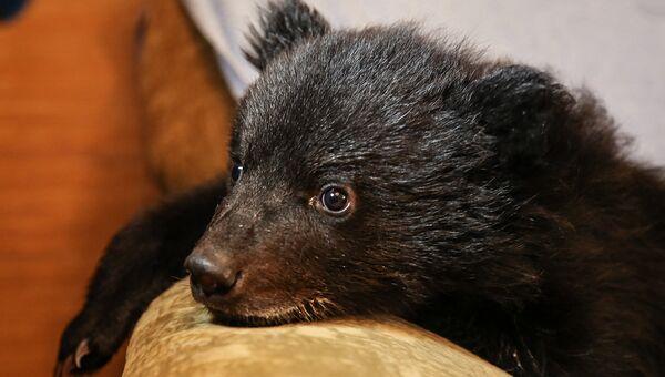 Таких животных, как медведи, нельзя просто отдать в добрые руки – им нужен специализированный уход и вольер для жизни