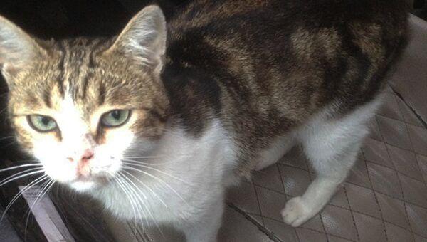 Кот, которого злоумышленники собирались использовать в качестве курьера для передачи наркотических веществ на территорию ИК-6 УФСИН России по Тульской области
