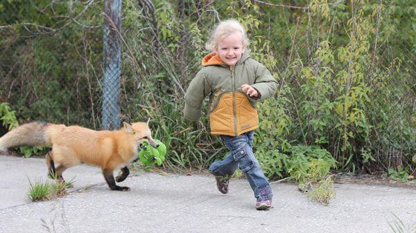 Домашняя лисица в Институте цитологии и генетики СО РАН в Новосибирске